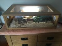 Baby Florida Kingsnake and full Snake-Box kit
