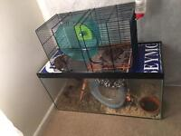 Degus with cage and accessories