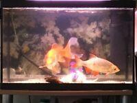 Large 60 litre fish Tank
