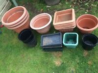 Various plant pots and trays