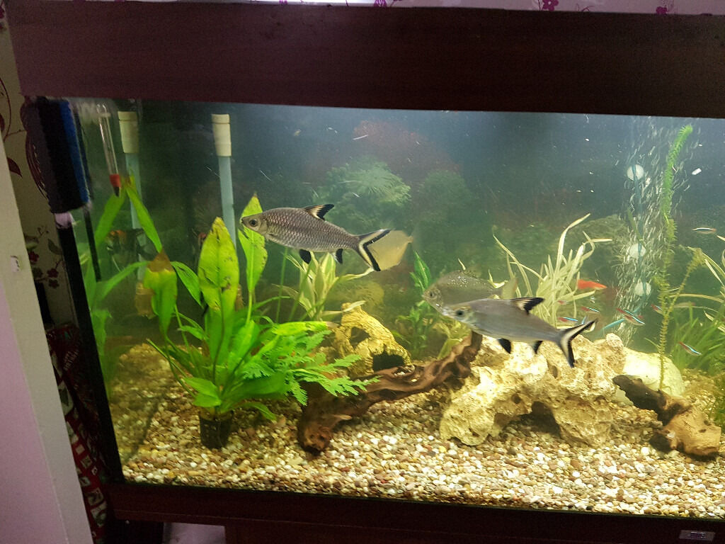 Juwel Rio 400 Dark Oak Cabinet And Fish Tank Ect