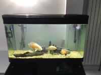 Boyu fish tank and stand (also includes external pump