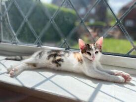 Lovely Kittens looking for forever home