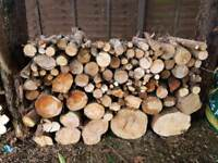 Tree cuts / firewood /woodpile