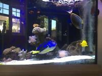 Marine fish set up