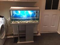 Tropical fish tank full set up