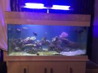 Marine rock & fish & lights for sale