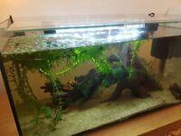 Tropical Fish tank - 54 litres