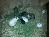 Rabbit's for sale