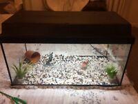 Juwel Aquarium Korallux 60