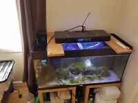 Marine fish tank in need of attention!! Going cheap
