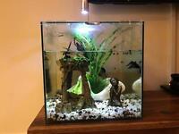 Tropical aquarium with male betta fighter