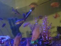 22 tropical fish