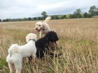 Dog Boarding Available Home From Home Experience Pet Sitting