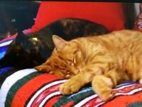 URGENT - 2 Cats looking for Foster or Permanent Home - URGENT