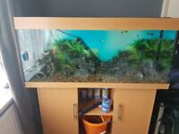 Jewel 280 litre fish tank