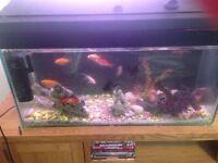 Full set up filter,pump,air pump orniments gravel light 11 fish