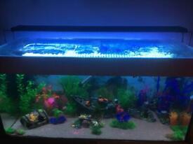 3ft extendable LED aquarium light bar for fish tank