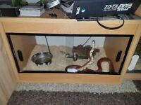 2ft vivarium for sale. Collection only