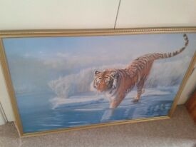 Tiger Picture/Painting