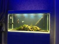 Tropical fish for sale longbenton