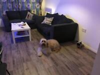 Baker Street NW1 pet walker/sitter. Dog walking, sitting,home boarding,day care in central London!