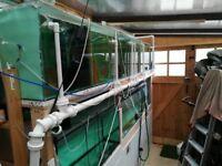 Breeding set up fish tanks