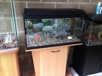 Over 2.5 ft fish tank 80 cm full set up with stand filter heater light gravel ornament all work