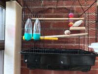 A pair of zebra finches