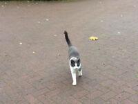 CAT MISSING SINCE MID OCTOBER 2017