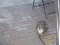 Young cat / kitten in Lower Compton area - possibly lost? Dark grey with white