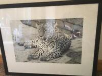Solitary Hunter - Persian Leopard (Clive Meredith)