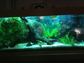 jewell 180 litre fish tank complete