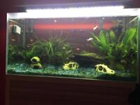 130l tank with fish
