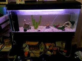 Large fish tank with equment
