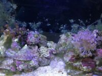 Marine Fish Tank/Coral/Fish