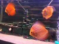 3 discus for sale 2four inch and one 5inch no time wasters