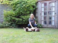 PetStay Bristol & Bath Branch are looking for Dog Carers in Bristol
