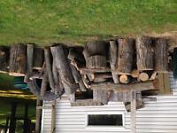Recently cut maple trees!!!