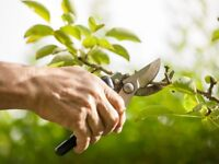 Gardening and maintenance in and around Yeovil, mowing, clearance, hedge trimming, pruning & more...