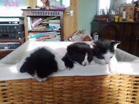 Beautiful kittens, one left