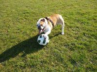 Small Dogwalker/petsitter. Trustworthy, experienced mature lady. £20 an hours walk 'n' cudddes