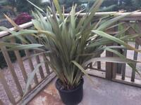 Large garden patio outdoor plant