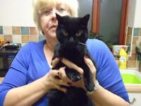 Free to good Home - 14 Year old Black Cat