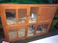 Rabbit Hutch and Rabbit