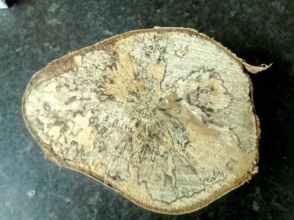 Spalted Wood In Thorpe Hesley South Yorkshire Gumtree