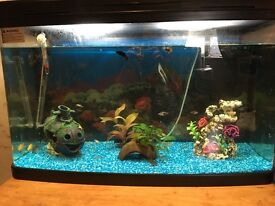 Tropical tank and fish