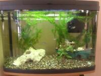 64ltr panoramic aquarium