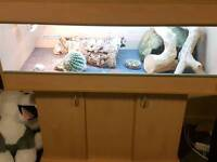 Bearded dragon with complete 4ft vivarium and stand