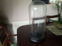 Taxidermy Large Glass Dome with bun feet base
